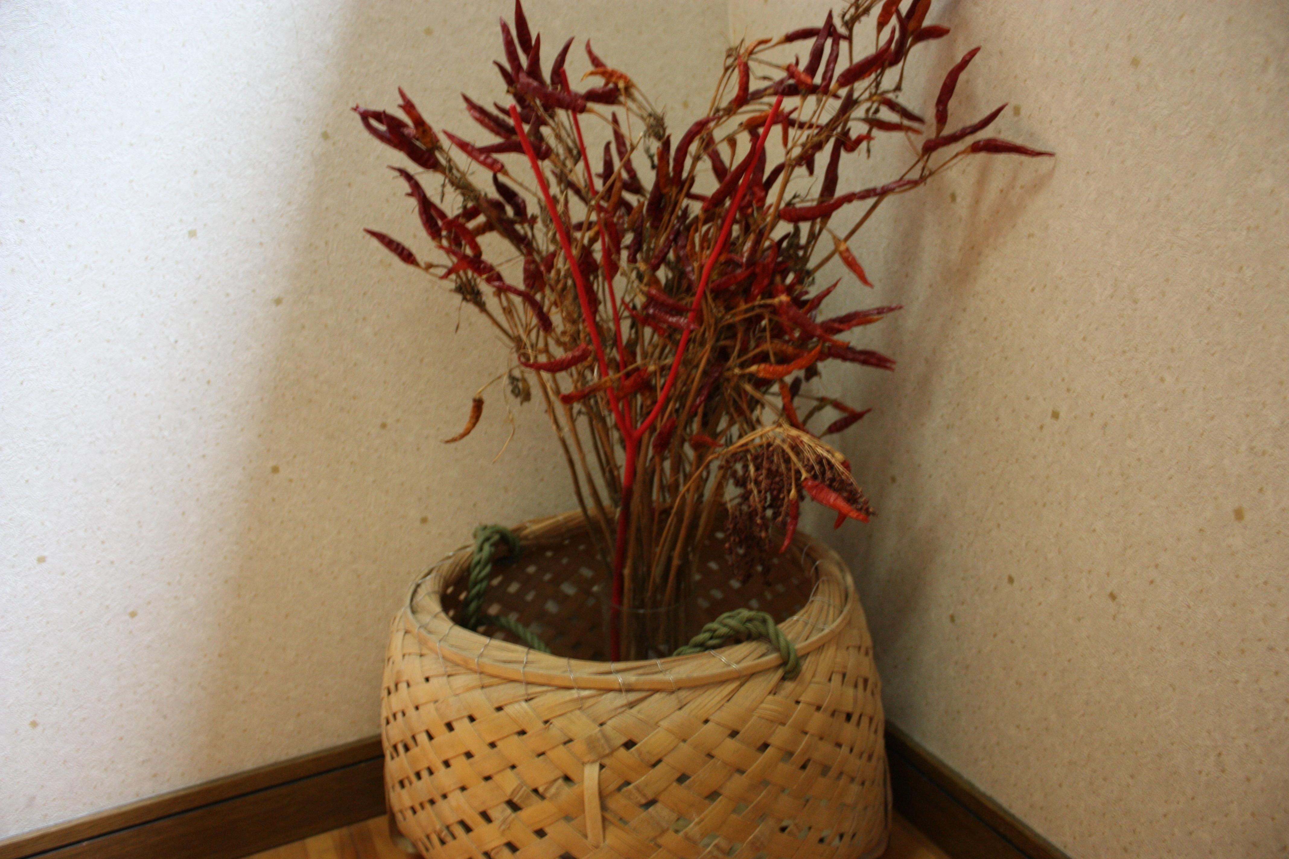 shirakiya-kaidannite.jpg